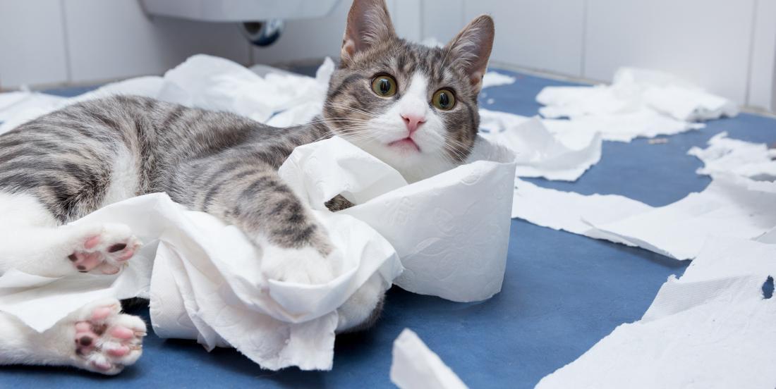 Paquet de 24 rouleaux de papier hygiénique gratuit grâce aux aubaines de la semaine