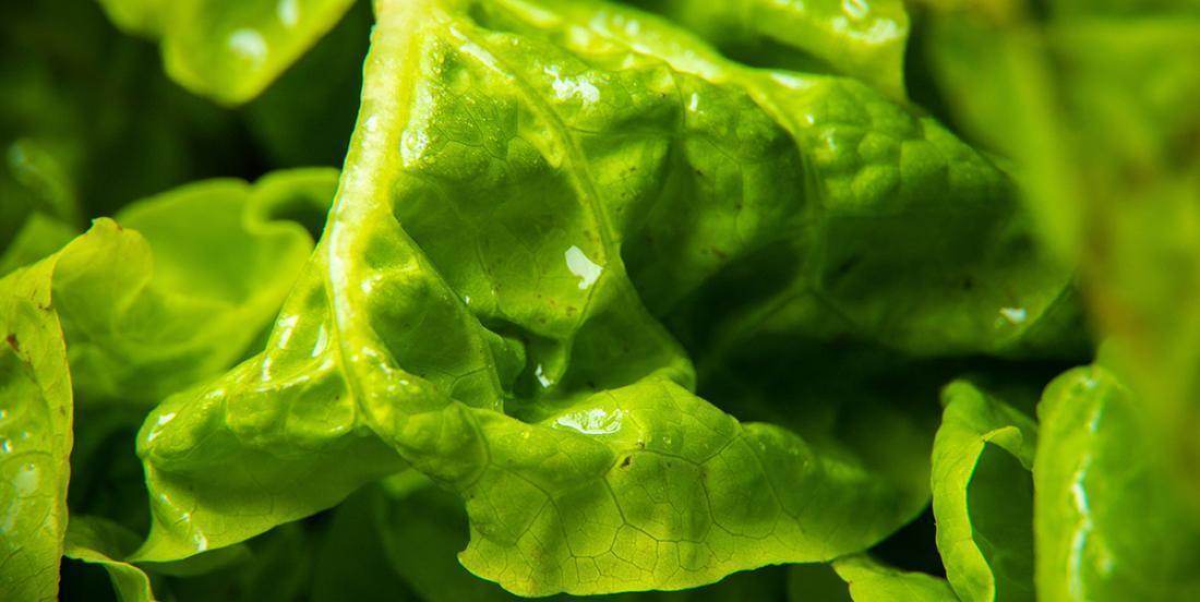 Important rappel de salade contaminée à la bactérie E. coli