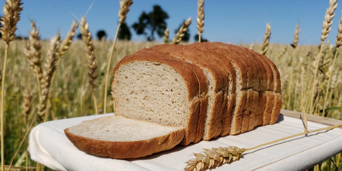 Du pain aux grillons dans une boulangerie de Montréal