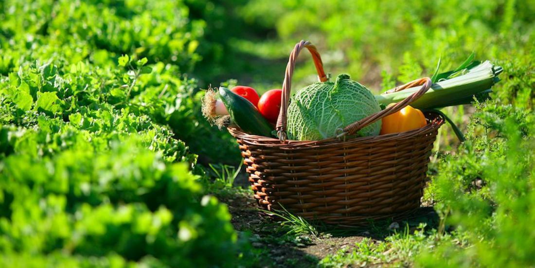 Crise du coronavirus: le Jardin botanique de Montréal veut doubler sa production de légumes