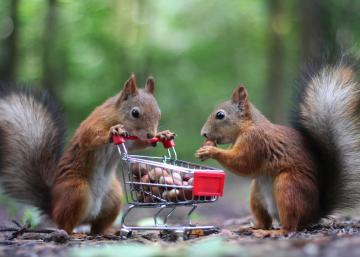 Empêchez les écureuils de venir faire leurs courses dans votre potager cet été...
