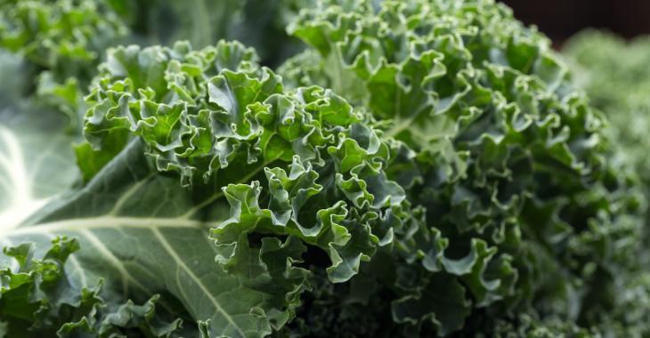 Le chou frisé est l'un des légumes les plus contaminés sur le marché